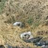Stop Bird Hunting on the Lake Earl Wildlife Refuge