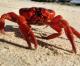 Neurotoxin in Crab warnings